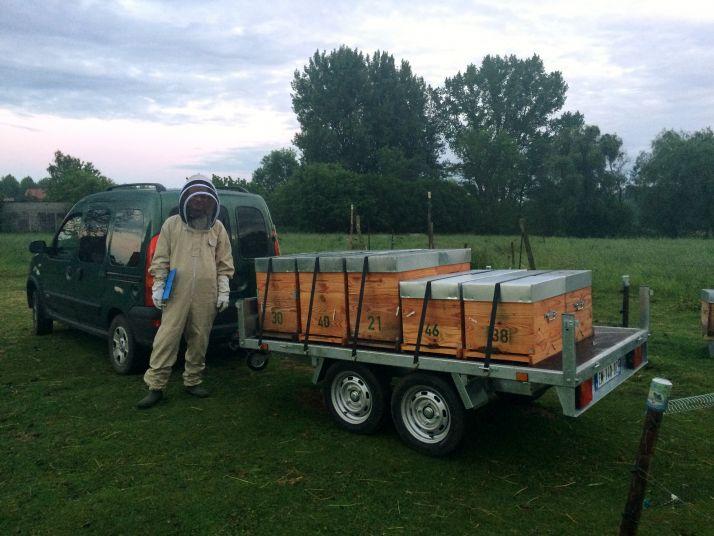 La Marne au secours des abeilles du Nord. © Coop de France déshydratation