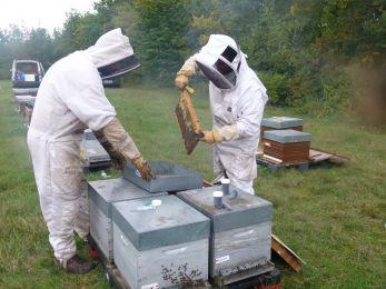 F. Allier / ITSAP Institut de l'abeille - prélèvement d'abeilles