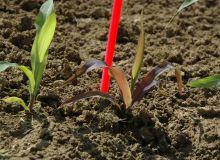 Timac agro lance Phosph'Or, une application entièrement dédiée à la fertilisation en phosphore. © C. Milou/Pixel Image