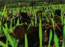 Battle®Delta nouvel herbicide céréales d'automne est composé de flufenacet et de diflufenican. ©Frederic Lenoir / Fotolia