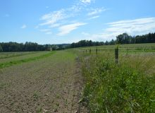 Observer la nature est le meilleure moyen de se rendre compte du fonctionnement d'un sol fertile. CP : C. Waligora/Pixel6TM