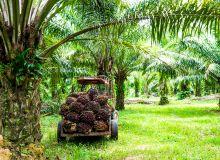 Dans son rapport mensuel, la FAO indique qu'en décembre 2019, l'indice des prix des produits alimentaires a atteint sa valeur la plus haute depuis cinq ans. La plus forte hausse est à imputer aux huiles végétales, huile de palme en tête.
