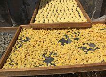 Dans un communiqué publié le 30 octobre 2019 par le SIFPAF et le CFSI , les industriels des pâtes alimentaires et semouliers s'inquiètent de l'envolée des prix du blé dur sur le marché mondial.