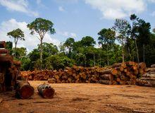 Le CESE étudiela manière dont l'Union européenne peut renforcer la lutte contre la déforestation « importée ». © Marcio Isensee e Sá/Adobe Stock