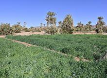 Le Maroc fortement touché par la sécheresse. © Happyculteur/Adobe Stock