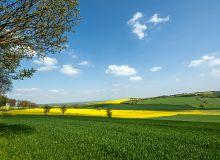 Estimations de surfaces pour les céréales d'hiver, le colza et les cultures de printemps. ©Bernard 63/Adobe Stock