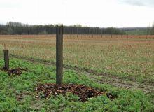 20 kg de BRF ont été disposés au pied de chaque arbre et arbuste. © A. Lambert / Pixel Image