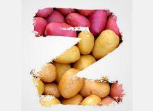 Zorvec Enicade, nouveau fongicide pour pomme de terre
