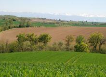 Les aménagements parcellaires sont un enjeu pour favoriser la biodiversité dans les espaces agricoles. © C. Milou/Pixel Image