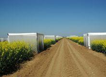 crédit photo : S. Seysen / Sstation de recherche colza du semencier Dekalb à Boissay (28)