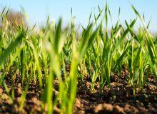 Via Végétale propose 3 nouveautés permettant de réduire la pression fongique tout au long du cycle des cultures. © Osr72/Fotolia