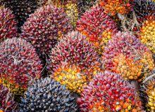 Huile de palme : la taxe Nutella revient sur le tapis. © Nop16/Fotolia