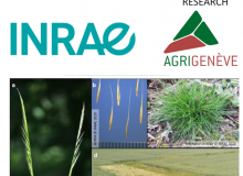 Le Natural Resources Institute, Rothamsted Research, l'Inrae,  Swiss No-Till et AgriGenève  mènent l'enquête sur la vulpie queue-de-rat.