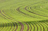 Une intervention insecticide même tardivement à l'automne a un intérêt pour lutter contre les pucerons. ©Pierre-Alain Dutheil/Adobe Stock
