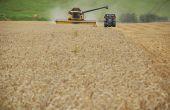 En 2020, le repli de la production végétale (- 3,1 %) est nettement plus marqué que celui de la production animale (-1 %). La baisse de la récolte céréalière est l'effet dominant. Photo : N Chemineau