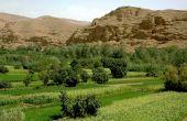 Le programme Maghreb oléagineux sur les rails
