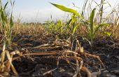 Les trois éléments NPK prennent tout leur sens en agriculture biologique sans apport organique. © Bmargaret/Adobe stock