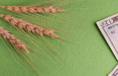 FarmLeap lance une nouvelle plateforme sur les prix de vente.© Romsvetnik/Fotolia