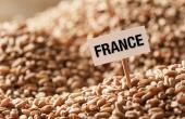 L'Hexagone est de loin le premier fournisseur de blé tendre du Maghreb. © Alexandr Vasilyev/Fotolia