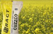 Cuzzco : variété de colza précoce, a obtenu la première place en rendement grain au CTPS 2015 avec 106,95% des témoins. © RAGT