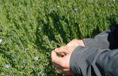 La centaine d'hectares d'Orival sous contrat Grainoble® se répartie entre Beauce, Berry et Charente.