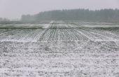 Céréales à paille : attention à la deuxième offensive hivernale. © Viktoriia1974/Fotolia