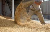 La consommation mondiale de céréales s'accroît. © Kybele/Fotolia