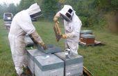 ITSAP Institut de l'abeille Le projet InterAPI a permis de mettre en évidence une corrélation très intéressante entre le butinage de CIM par les abeilles et le taux de vitellogénine qui influence directement la survie hivernale. Photo: F. Allier