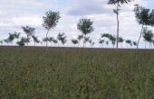 Toute végétation en croissance est un puits de carbone en puissance. Il ne faut d'ailleurs pas confondre stock avec variation de stock... Crédit Photo : Christophe Frébourg