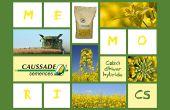 Memori CS est le premier colza d'hiver hybride inscrit par Caussade Semences au CTPS. © Caussade Semences
