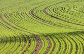 FortyBoost se veut une solution à la fois pour une meilleure évolution du sol et des premiers stades de la culture. Photo : Pixel6TM