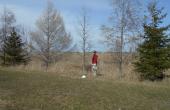 Le réseau de haies brise-vent dans lequel des observations d'insectes ravageurs et de prédateurs naturels ont été effectuées dans la région de Québec a 15 ans.
