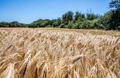 Redefinir l'agroforesterie pour mieux se l'approprier.