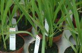 44 millions d'euros en jeu pour de nouvelles variétés de semences non OGM.