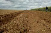 Prébuttage d'été en prévision de la plantation de pommes de terre en direct. Crédit photo : Fabien Monte